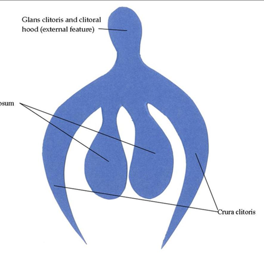Clitoris diagrams photos